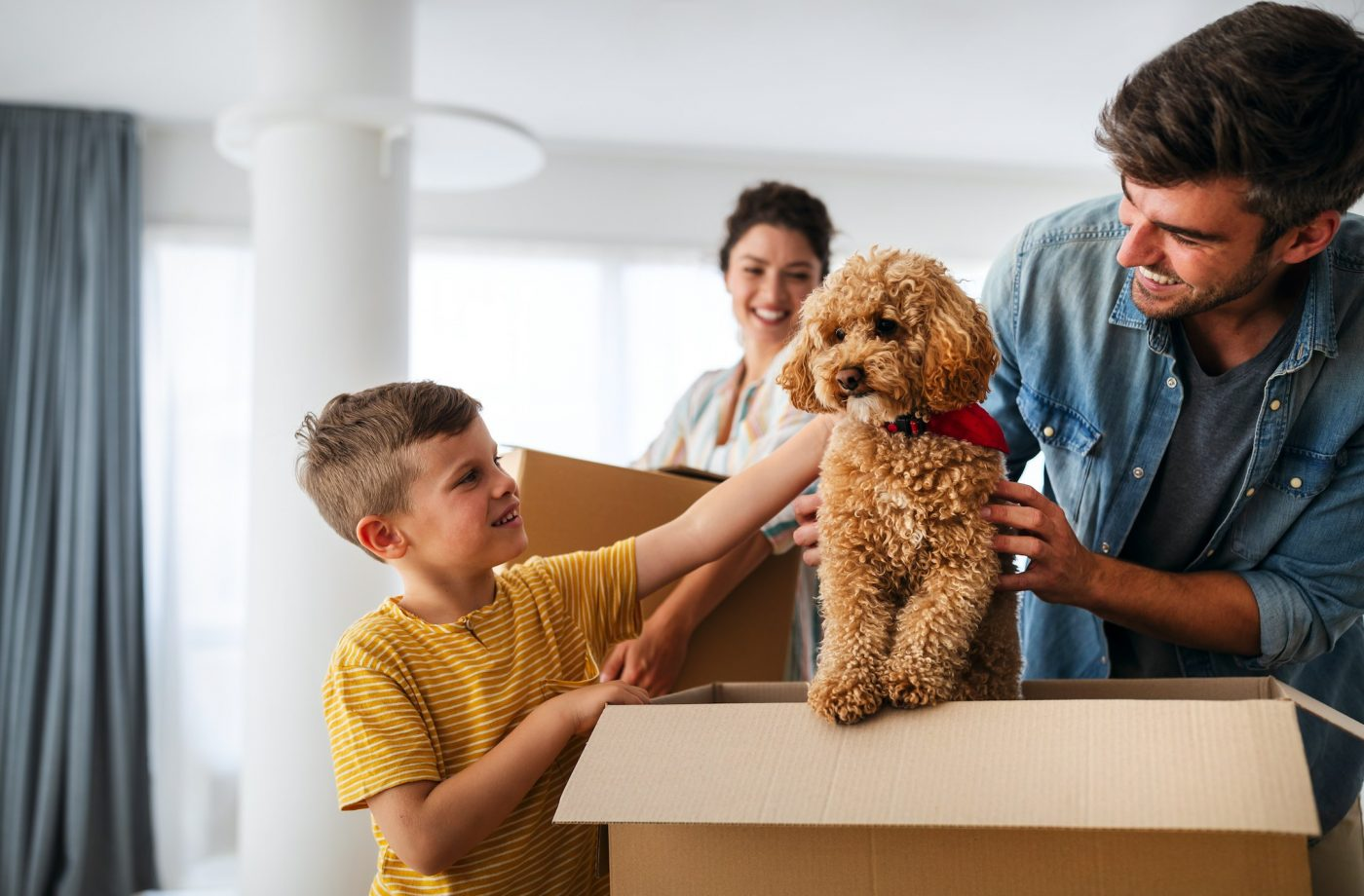 Family Pets During Move - 5 Tips To Make The Relocation Smooth - NEDRAC Keeps You Moving